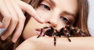 к чему снится паук