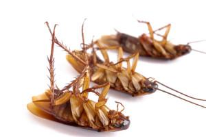 к чему снятся тараканы