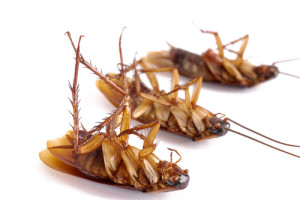 сны про тараканов