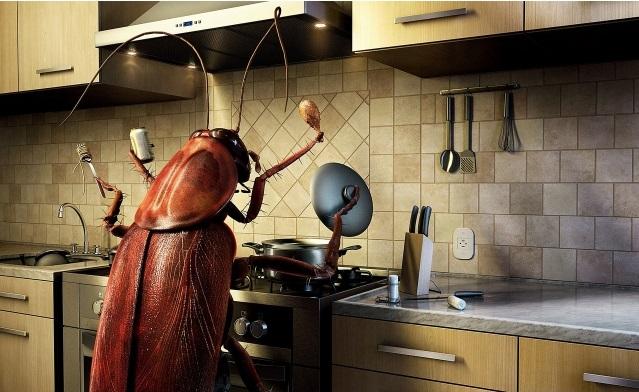 таракан женшине