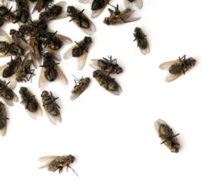 к чему снится рой мух
