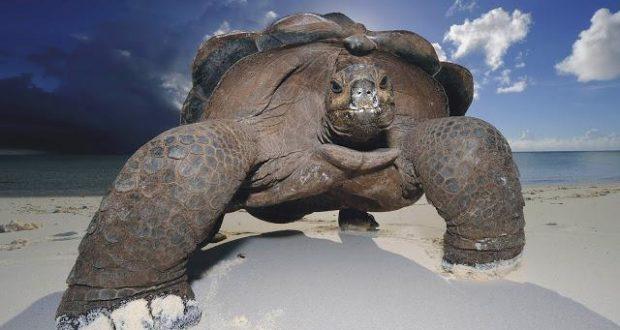 к чему снится черепаха женщине