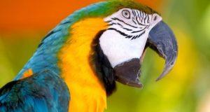 к чему снится попугай