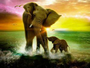 к чему снится слон в воде