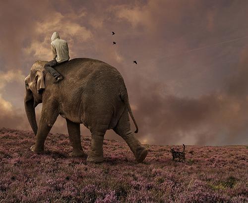 снится слон мужчине