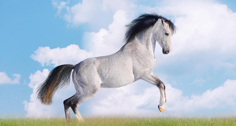 белая лошадь во сне женщины