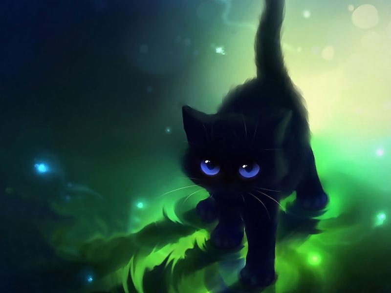 черный кот во сне