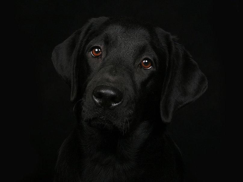 к чему снится черная собака женщине
