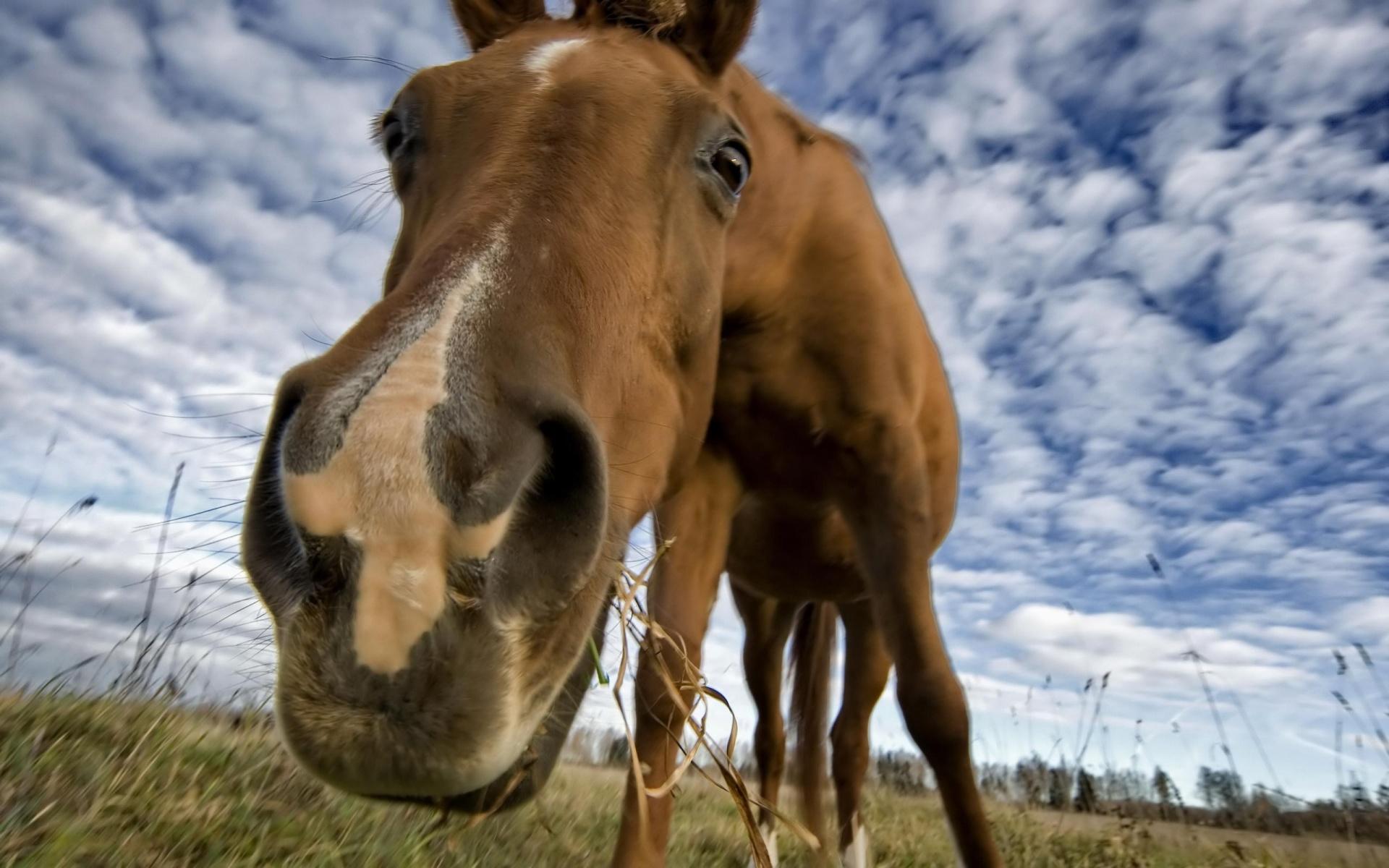 снится лошадь коричневая
